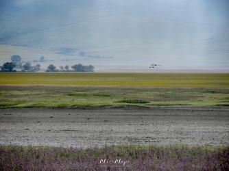 Birds Flying over the Plain - Ngorongoro Crater - Tanzania - by Anika Mikkelson - Miss Maps - www.MissMaps.com