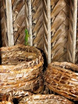 Gecko at Souvenir Shop - Comoros - by Anika Mikkelson - Miss Maps - www.MissMaps.com
