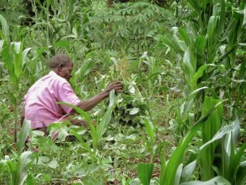 Man Tending to the Garden - Jinja Uganda - by Anika Mikkelson - Miss Maps - www.MissMaps.com