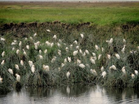 Resting Birds - Ngorongoro Crater - Tanzania - by Anika Mikkelson - Miss Maps - www.MissMaps.com