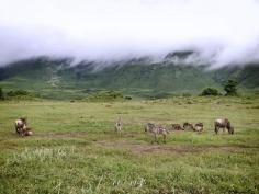 Zebra and Wildebeest - Ngorongoro Crater - Tanzania - by Anika Mikkelson - Miss Maps - www.MissMaps.com